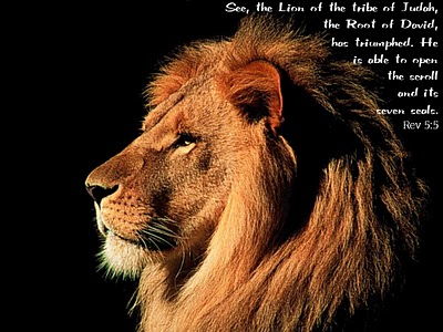 lion-of-tribe-judah_350_1024x768